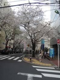 cerisier-tokyo3-renoma