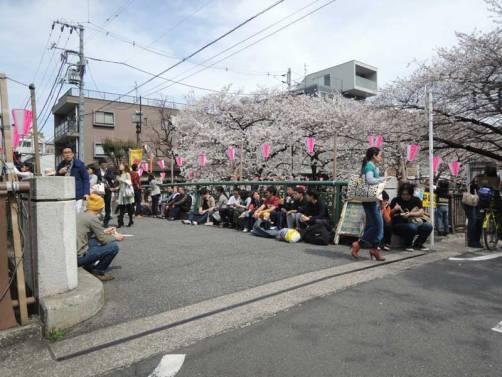 cerisier-tokyo7-renoma