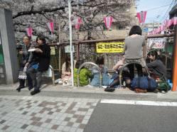 cerisier-tokyo8-renoma
